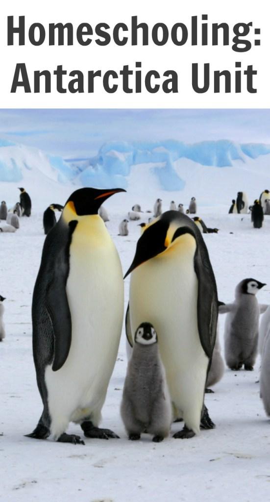 Homeschooling: Antarctica Unit