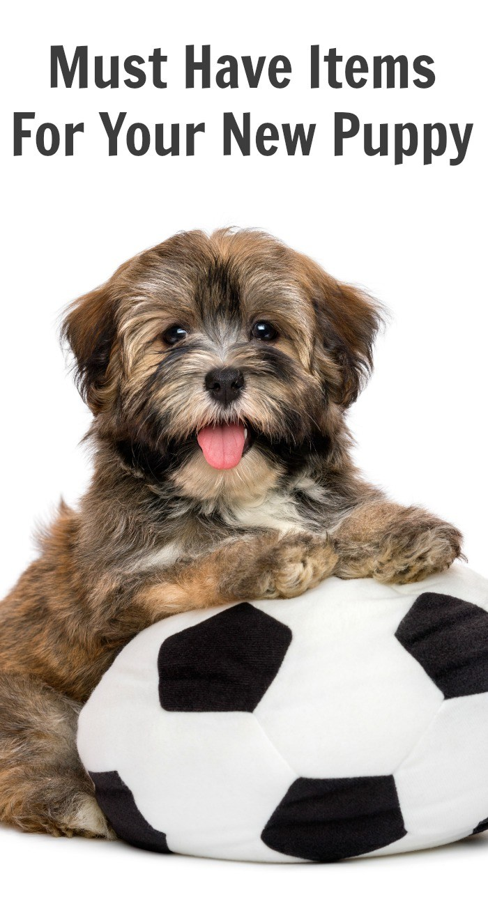 Must Have Items For Your New Puppy