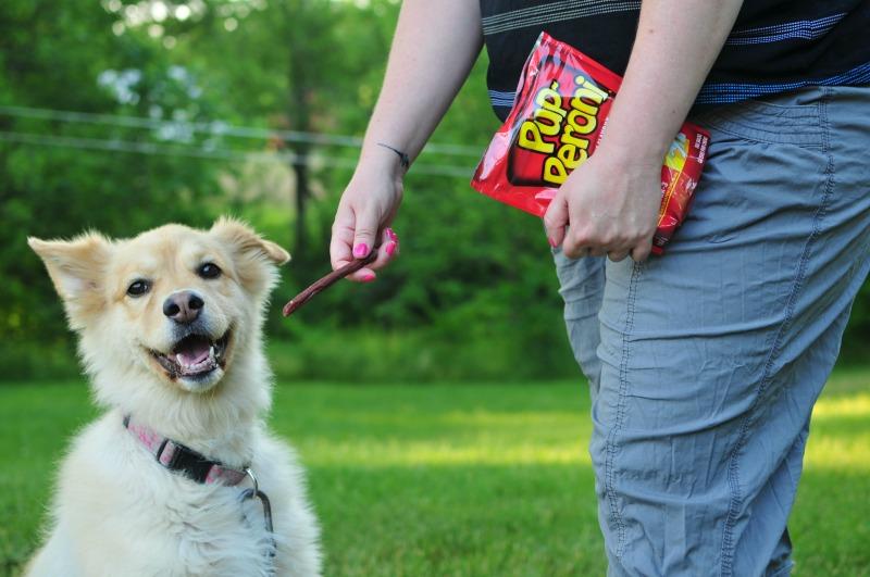 Favorite Summer Dog Activities
