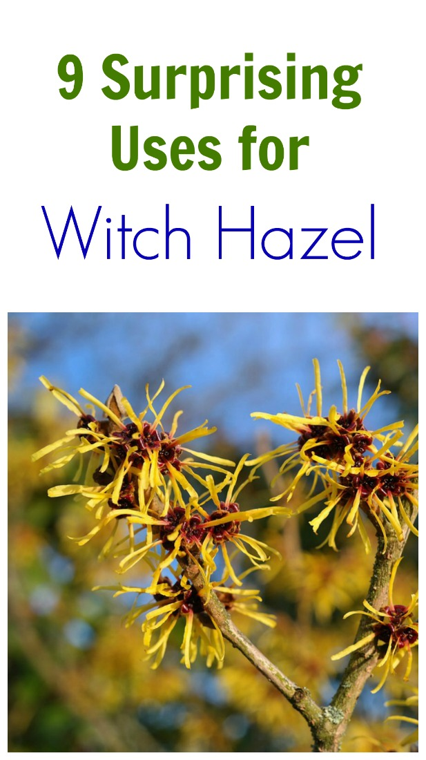 9 Surprising Uses For Witch Hazel